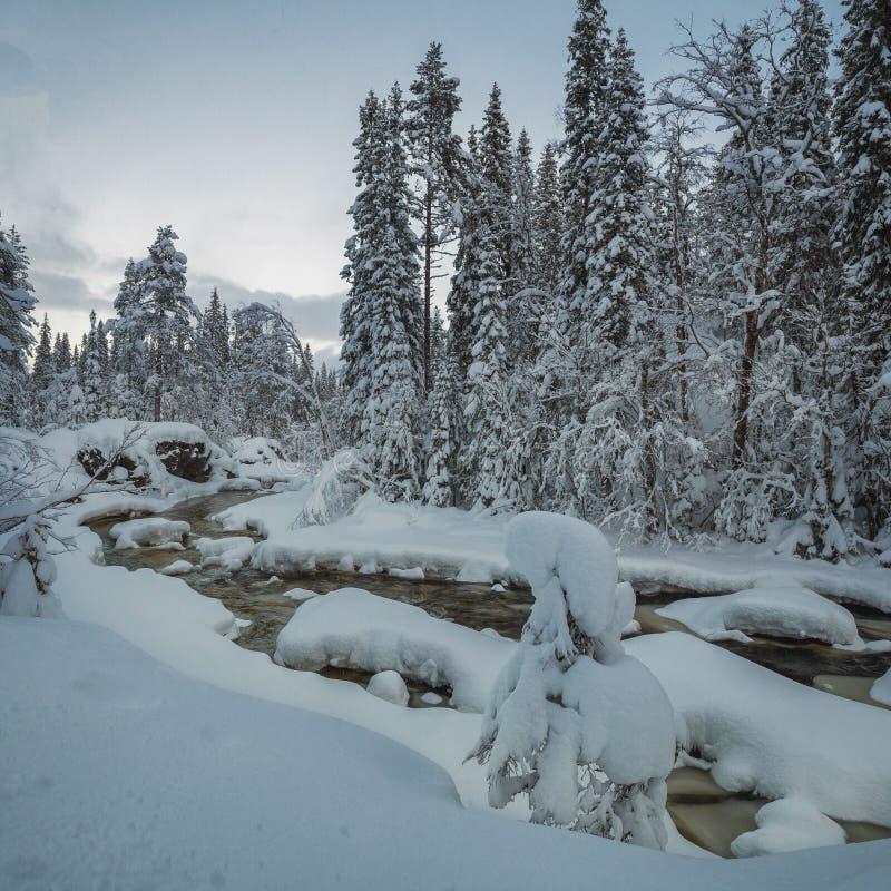 多雪的冬时在北部挪威 山的森林河 在Heia,格龙地区附近的Geitfjellet 库存照片