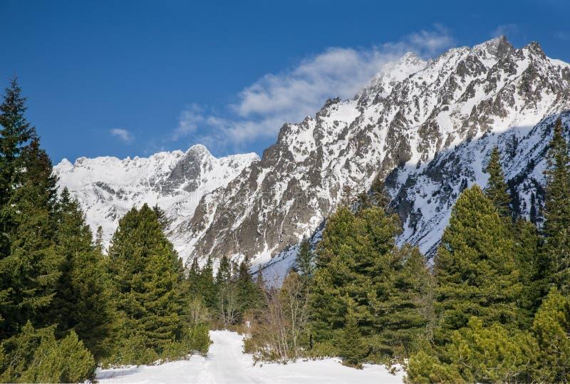 多雪的山激动人心的景色  免版税库存照片