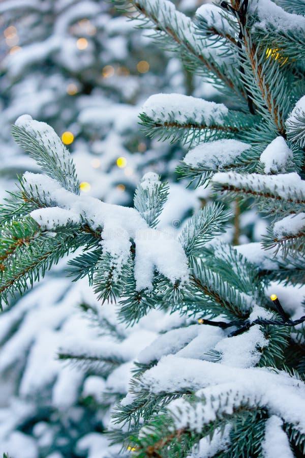 多雪的树特写镜头 库存图片