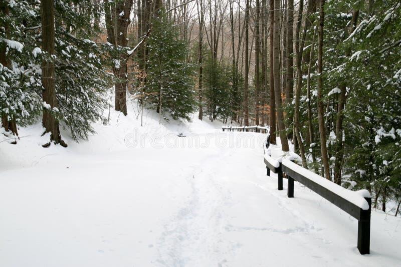 多雪的森林公路 免版税库存图片
