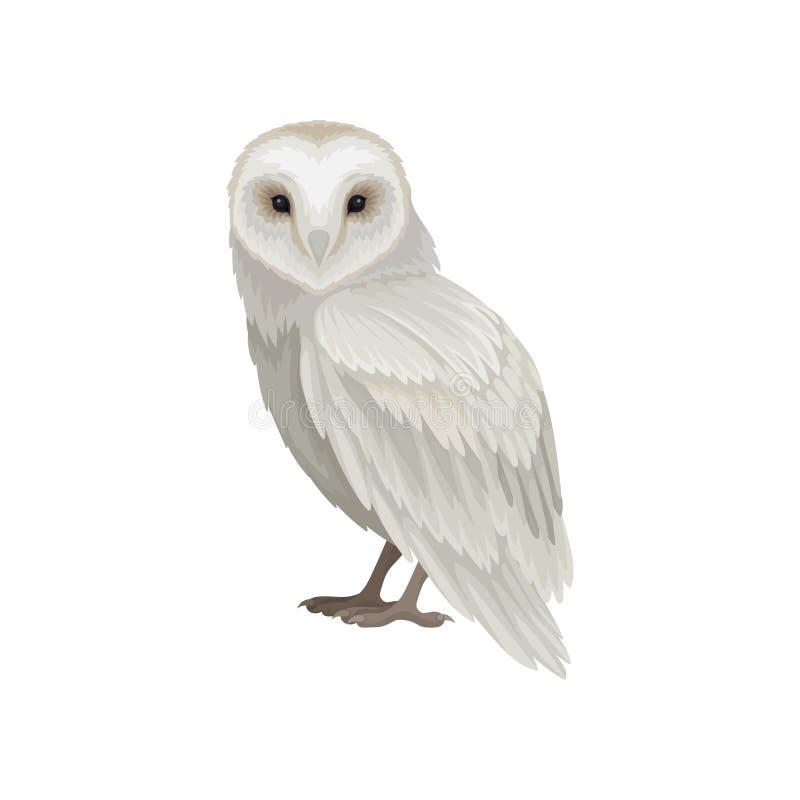 多雪的猫头鹰平的传染媒介象,侧视图 与白灰色羽毛的大鸟 野生生物和动物区系题材 向量例证