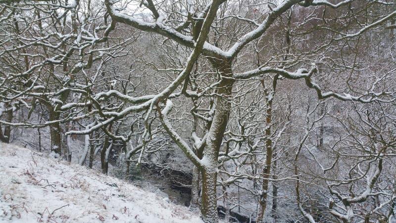 多雪的结构树 图库摄影