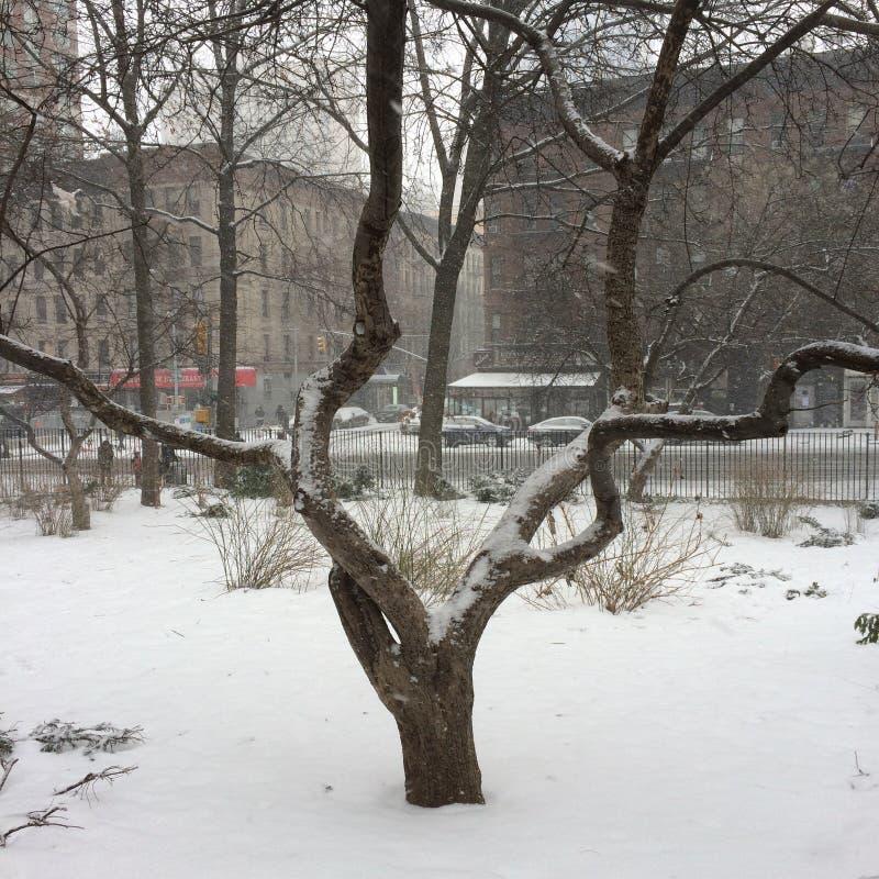 多雪的结构树 库存照片