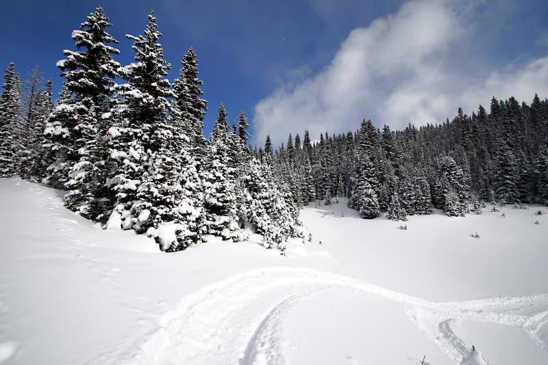 多雪高山的森林 库存图片