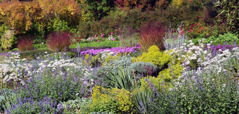 多年生植物的美好的颜色 库存照片