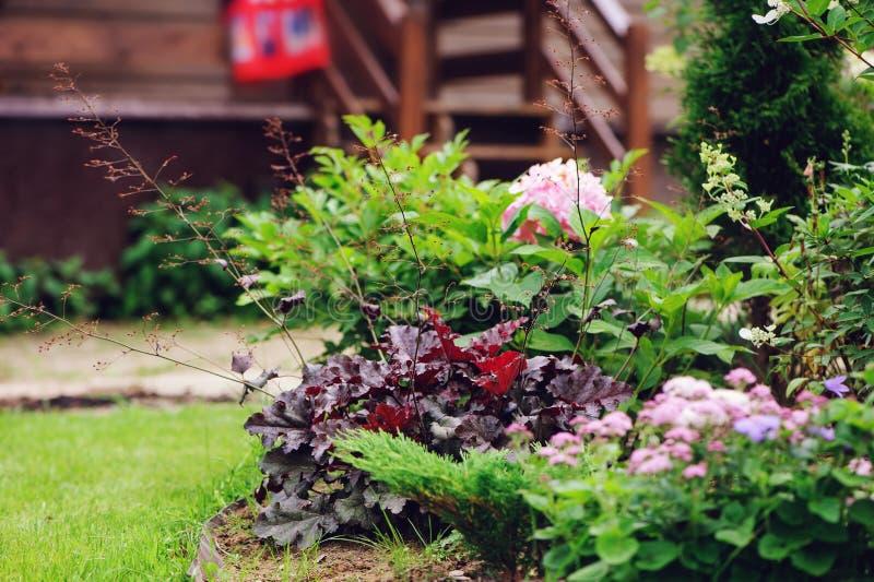 多年生植物组合在夏天庭院里与矾根属植物和玉簪属植物 库存照片
