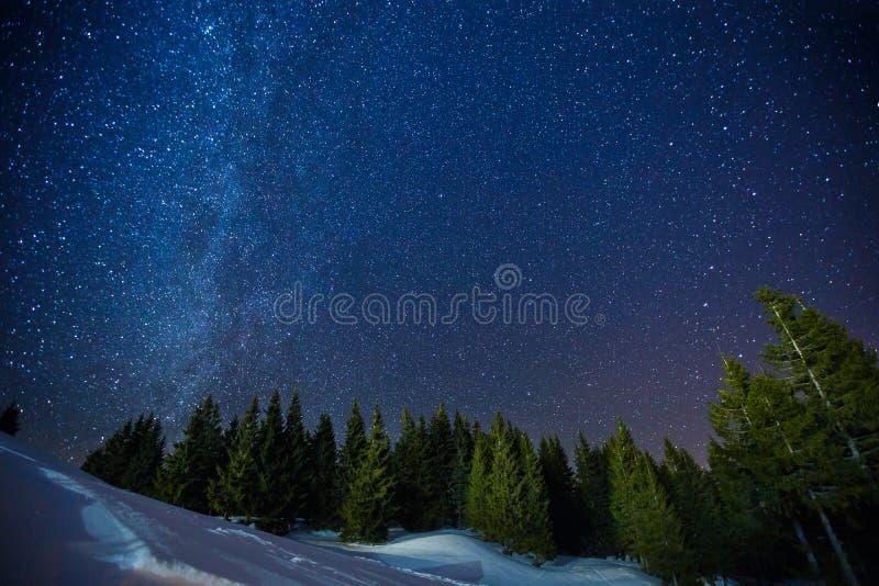 夜冬天满天星斗的天空,长的曝光照片午夜星和多雪的森林的Beautifull风景在杉木森林上的 库存照片