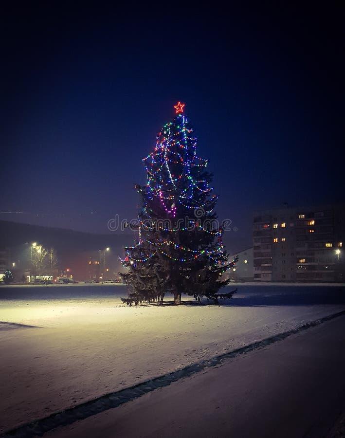 夜圣诞树 免版税库存照片