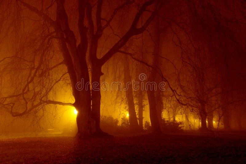 夜在公园。 免版税库存图片