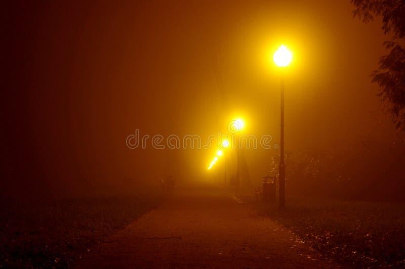 夜在公园。 免版税图库摄影