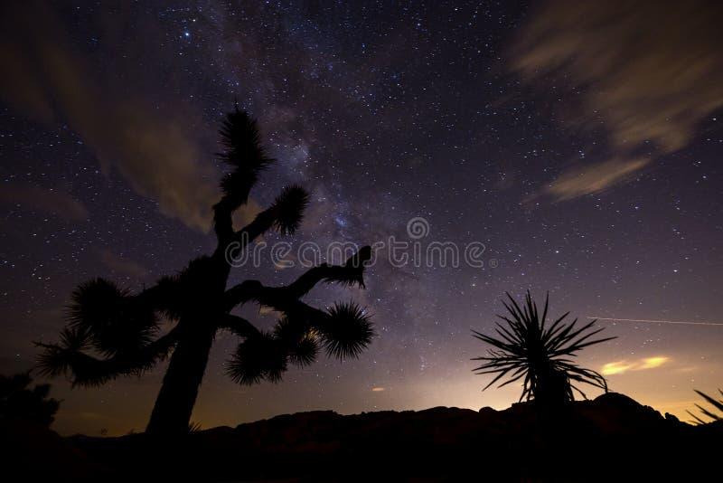 夜在约书亚树国家公园 免版税库存照片