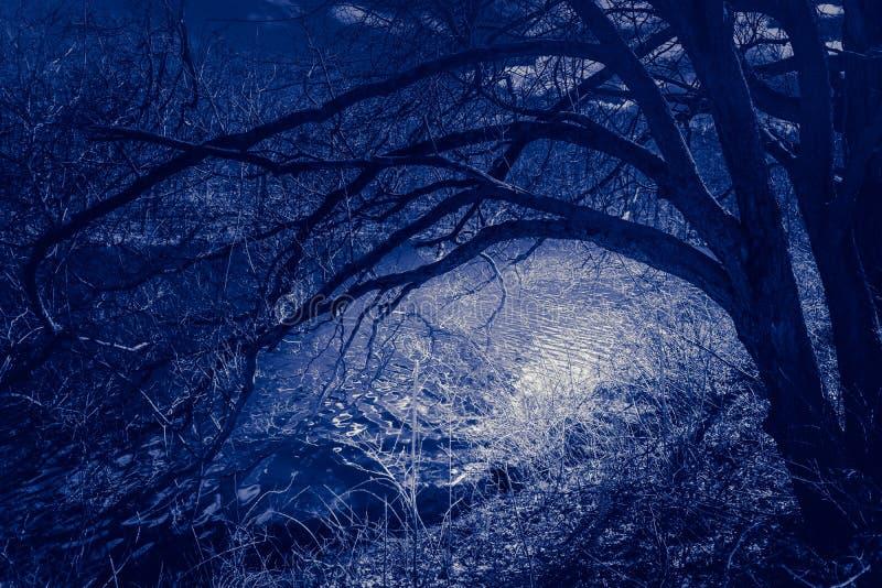 夜景在一个被困扰的森林里,当分支伸出一条被月光照亮河 库存图片