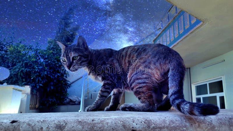 夜的猫 免版税库存图片