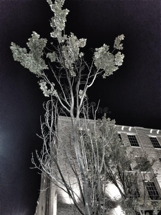 夜的静止 免版税库存图片