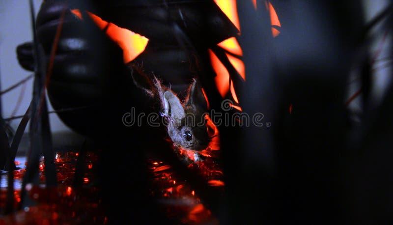 夜老鼠在万圣夜 免版税库存图片