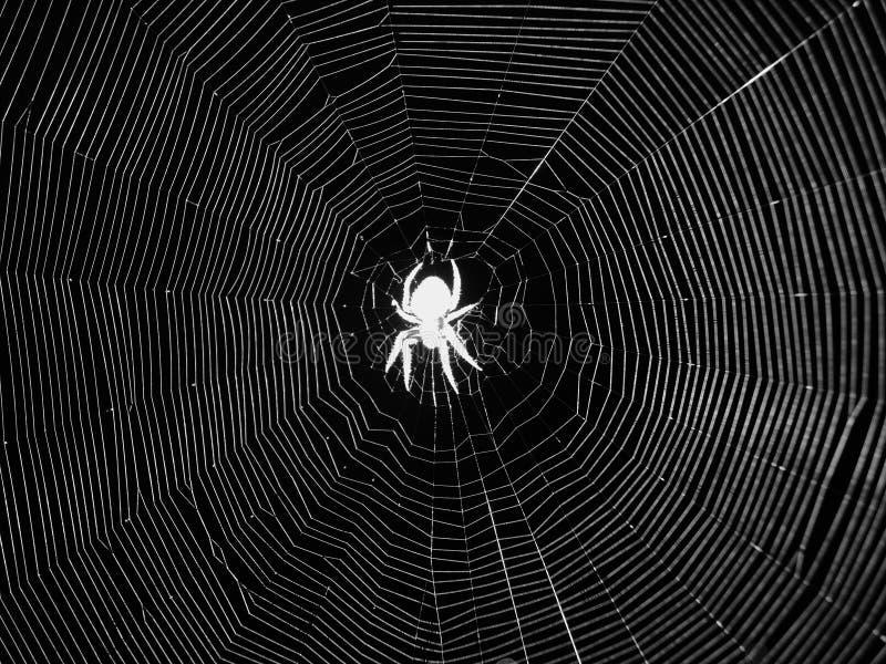 夜蜘蛛在网的中心 库存照片