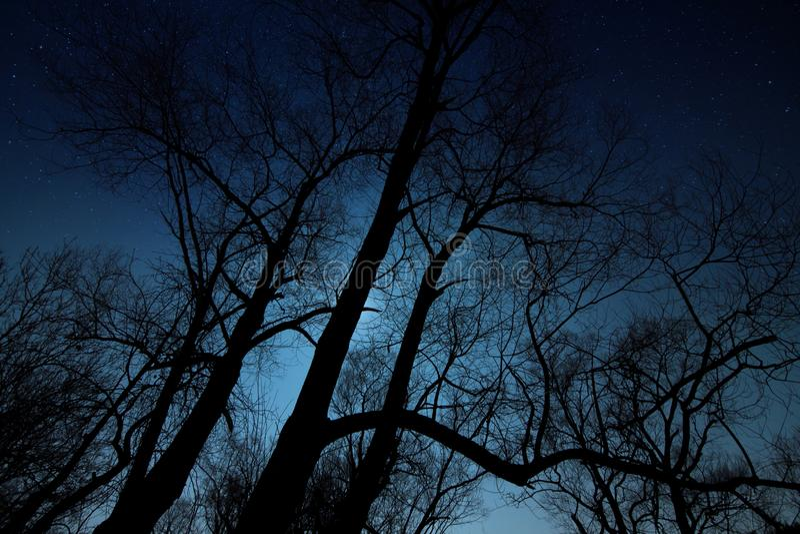 夜被射击树剪影 免版税库存照片