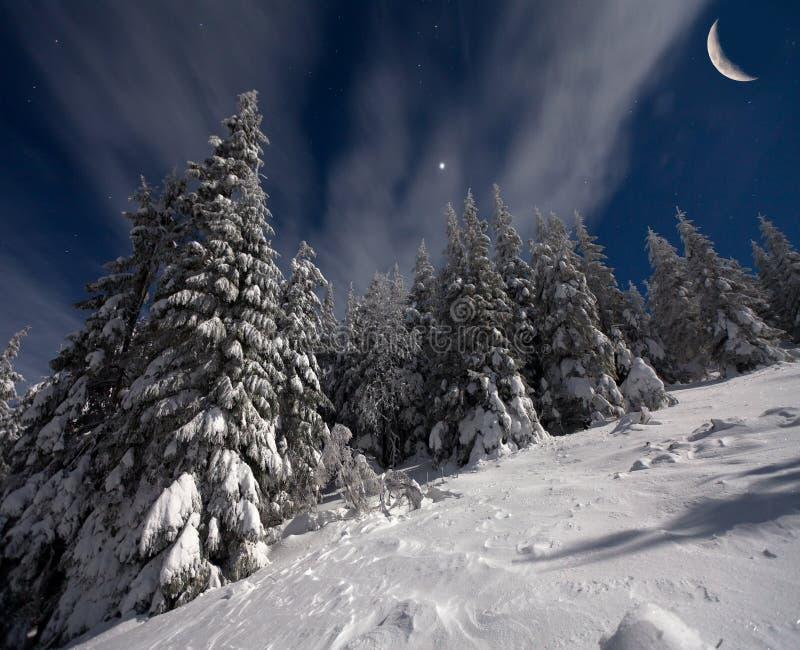 夜观点的积雪的冷杉木 库存图片