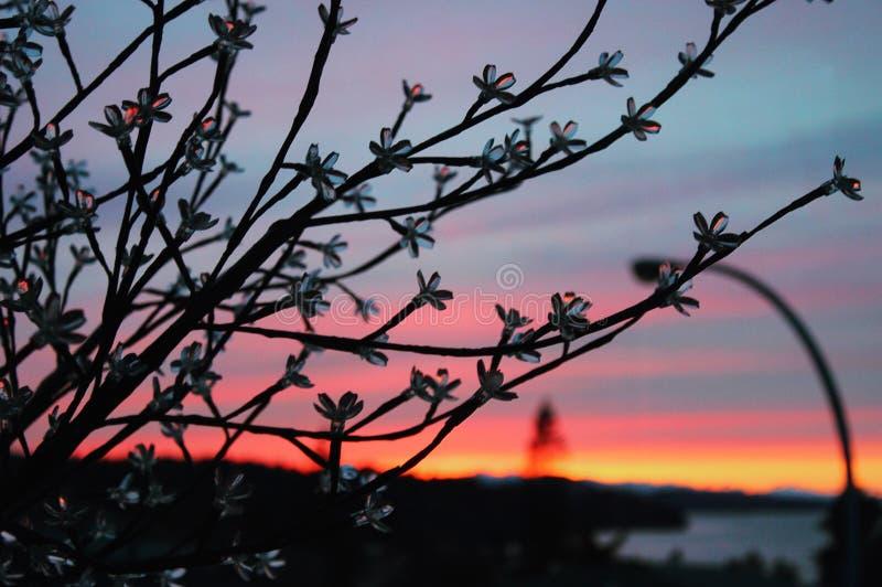夜间树冰窗格日落视窗冬天 免版税库存图片