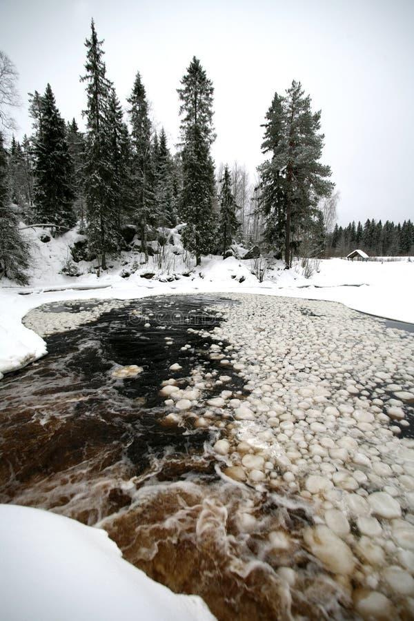 夜间森林湖冬天 库存图片
