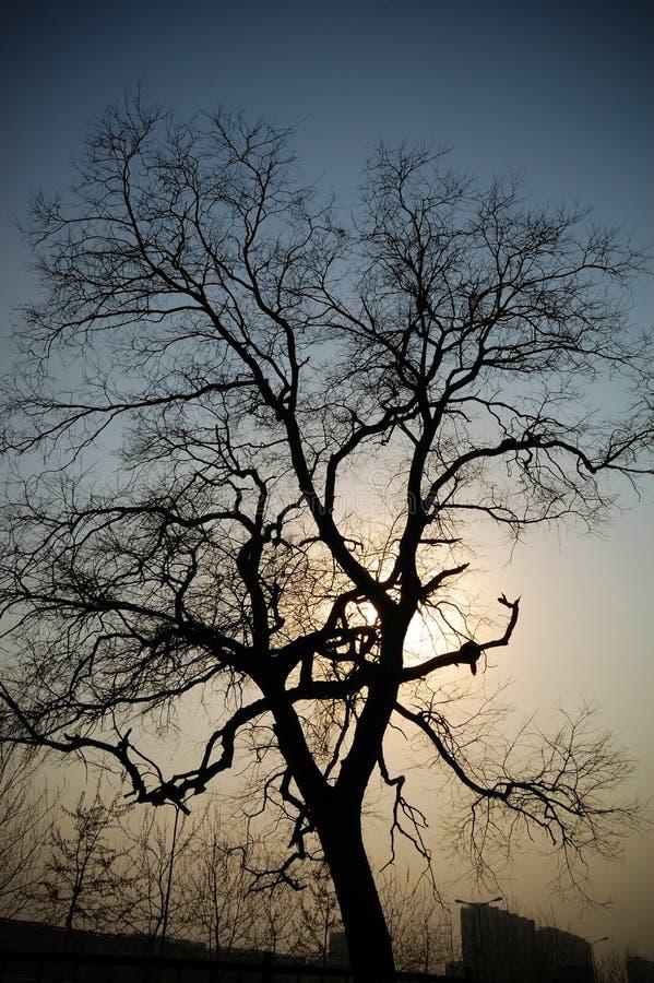 夜间结构树 免版税库存照片