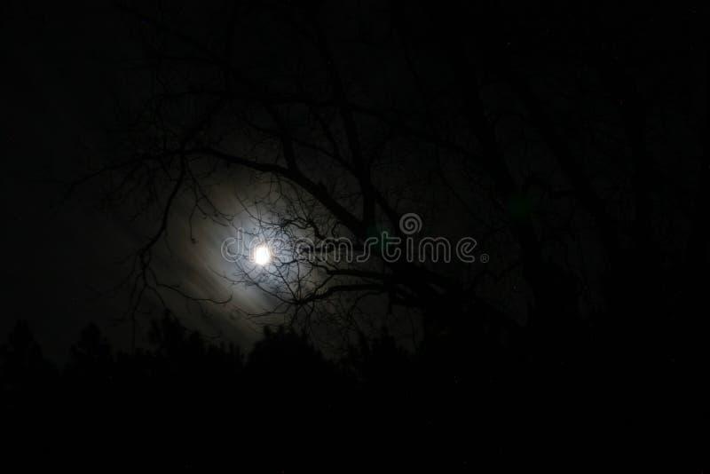 夜间月亮 库存照片