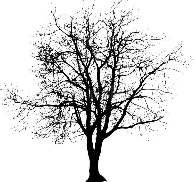 大一个结构树 向量例证
