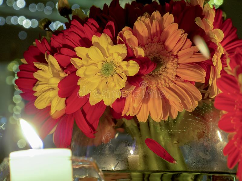 大丁草花束在花瓶的 免版税库存图片