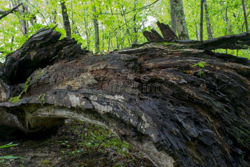 大下落的树n森林 库存图片