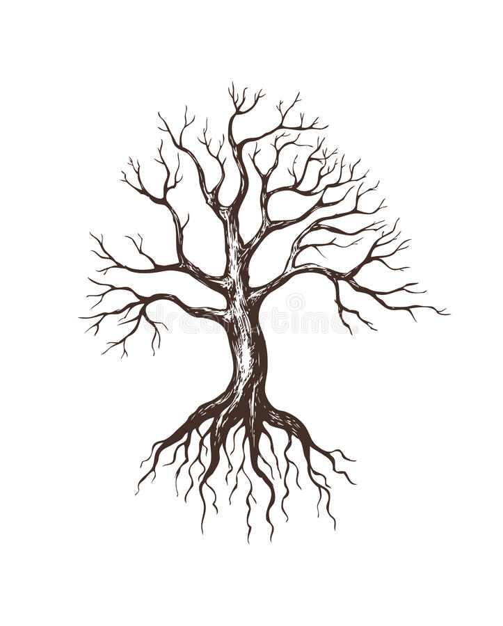 大不生叶的结构树 向量例证