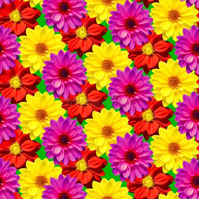大丽花Dahlietta混合了做一个无缝的样式的颜色 库存照片