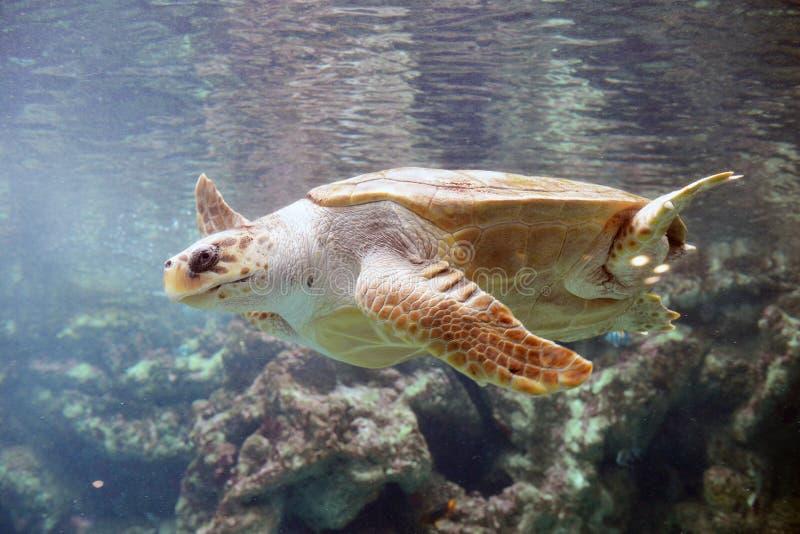 大乌龟 免版税图库摄影