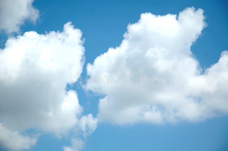 大云彩松的白色 库存照片