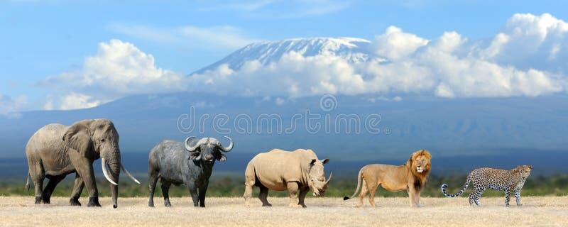 Download 大五比赛 库存照片. 图片 包括有 豹子, 猎人, 公园, 预留, 闹事, buffaloed, 危险, 哺乳动物 - 72366370