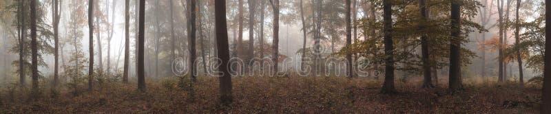 大五颜六色的全景有雾的秋天秋天森林风景 免版税库存图片