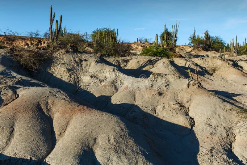 大仙人掌在红色沙漠, tatacoa沙漠,哥伦比亚,拉丁阿梅尔 库存照片