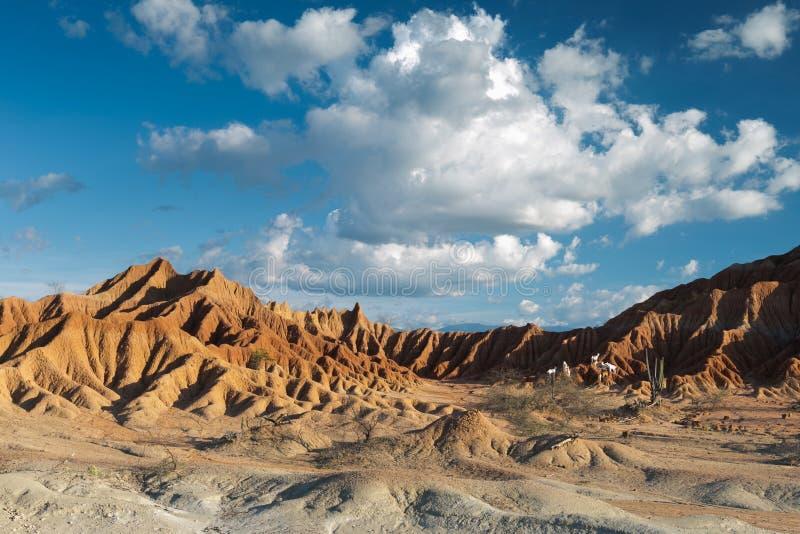 大仙人掌在红色沙漠, tatacoa沙漠,哥伦比亚,拉丁阿梅尔 免版税库存图片