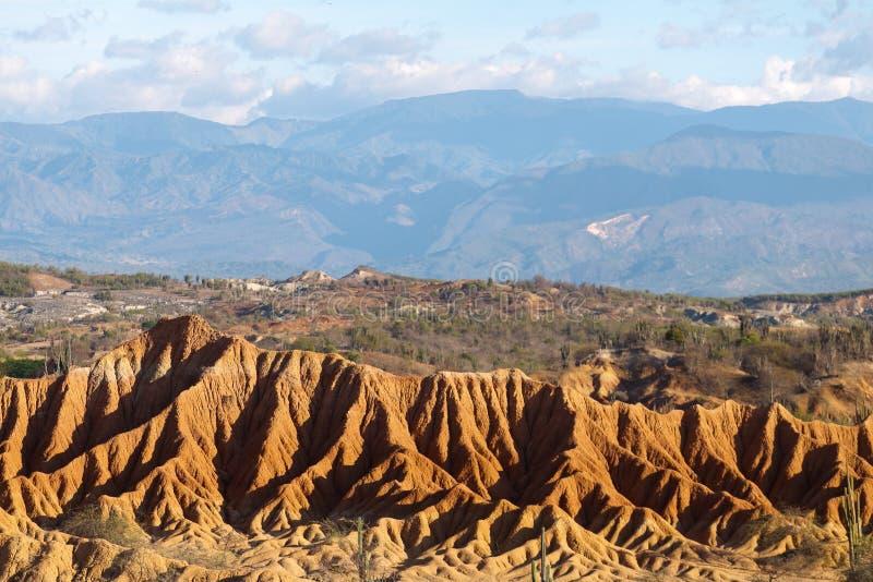 大仙人掌在红色沙漠, tatacoa沙漠,哥伦比亚,拉丁阿梅尔 免版税图库摄影