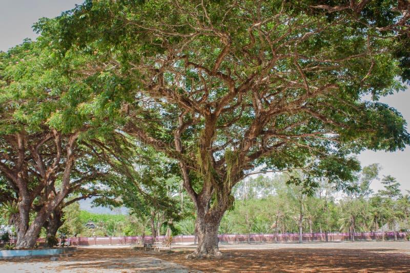 大公园结构树 库存图片