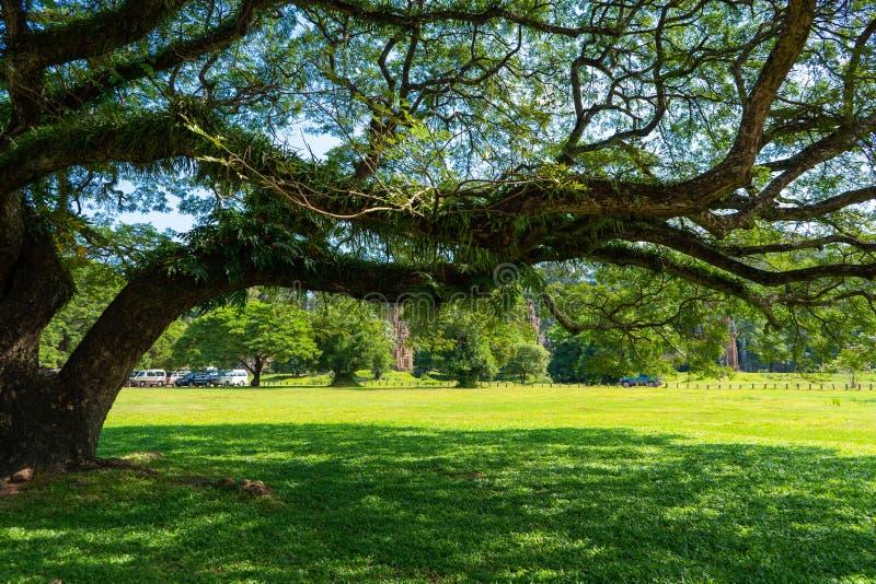 大公园结构树 免版税库存图片