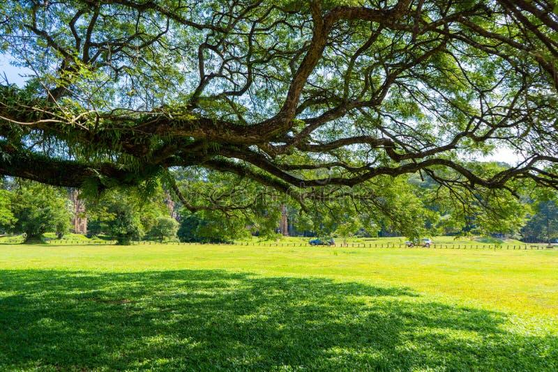 大公园结构树 库存照片