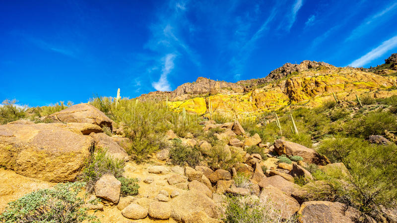 大冰砾、柱仙人掌和其他仙人掌围拢的Usery山五颜六色的五颜六色的黄色和橙色地质层数 库存图片