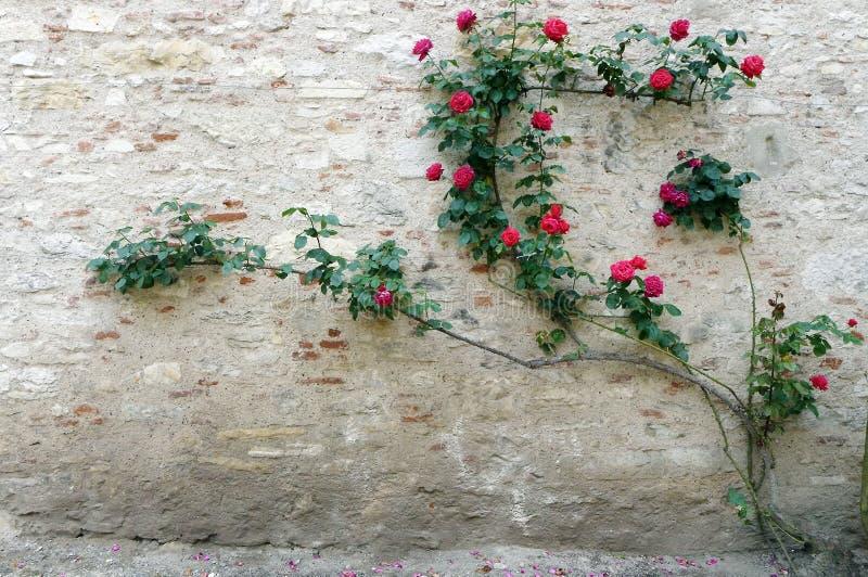 大别墅石墙玫瑰色登山人 库存照片