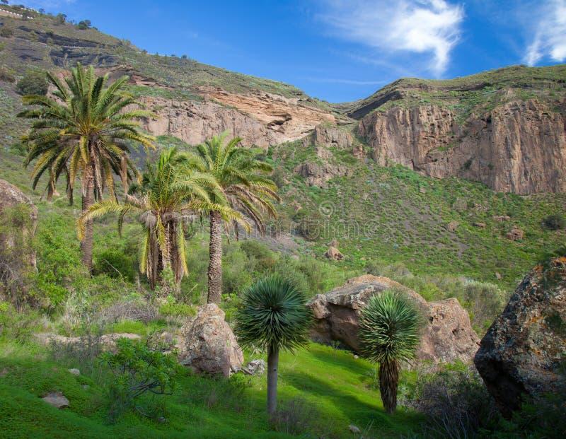 大加那利岛,阔德de Bandama在冬天以后下雨 免版税库存图片
