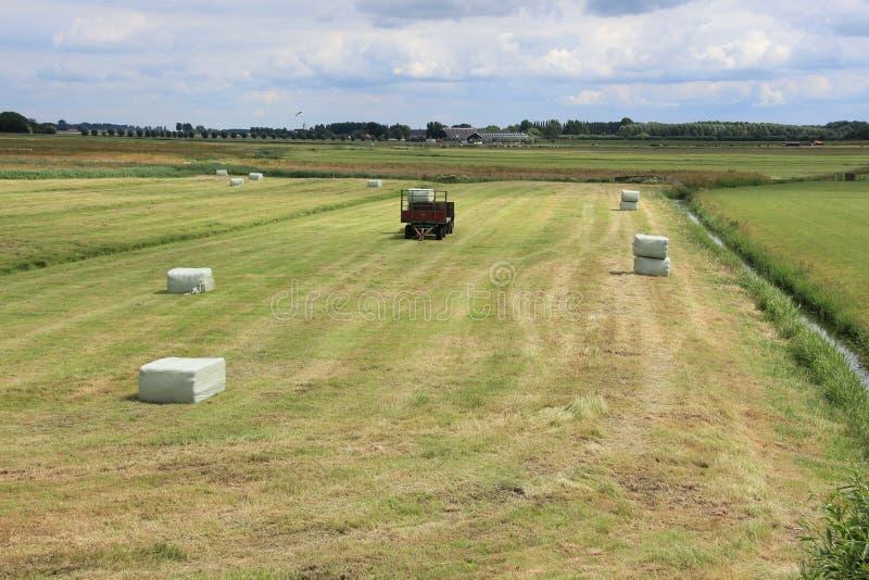 大包在无盖货车的干草在牧场地在村庄Zuidland在夏天 免版税图库摄影