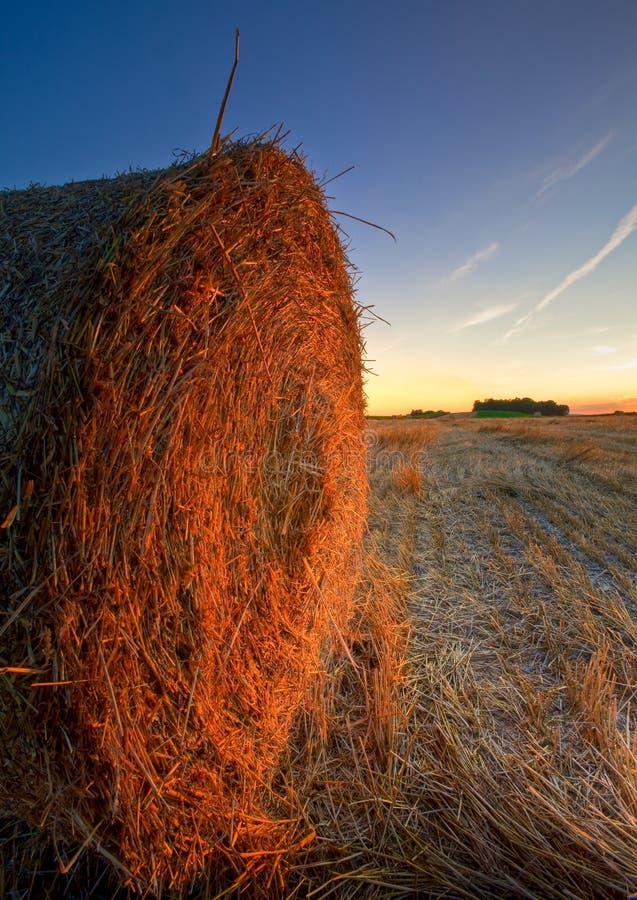 大包备草粮在周围 库存图片