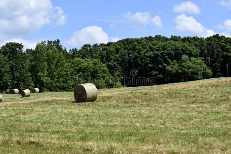 Download 大包干草在农村乔治亚 库存图片. 图片 包括有 白天, 大使, 晴朗, 干草, 亚马逊, 牧场地, 农村 - 72356089