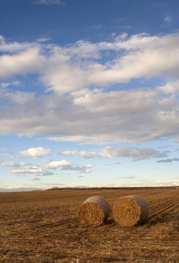 大包科罗拉多农村干草的照片 免版税库存图片