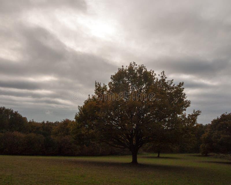 大单独橡树秋天多云喜怒无常的天空一领域 免版税库存图片