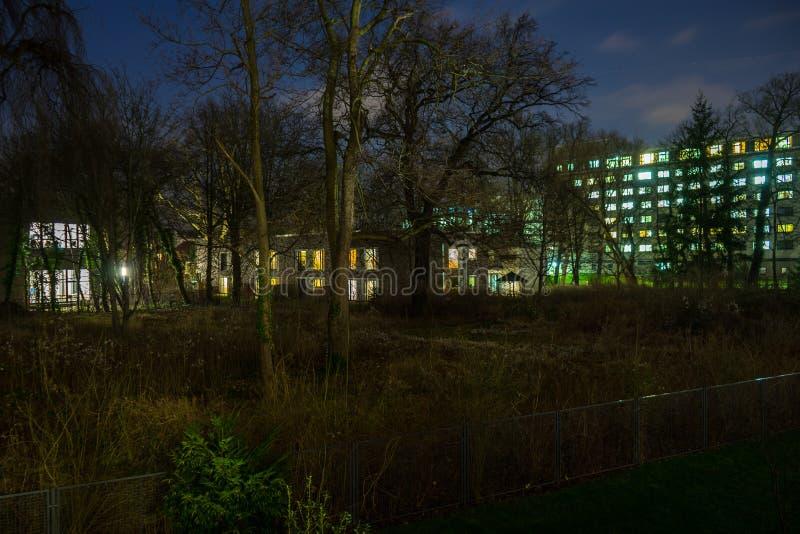 大厦和灌木围拢的一个小小块树在城市,在晚上 库存图片